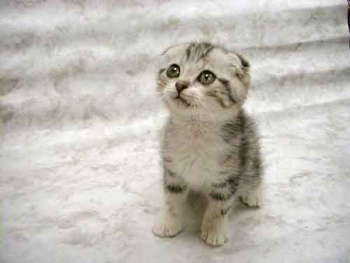 12901_cute-kitten-pictures-002