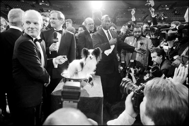 USA. New York City. 1999. Westminster Dog Show