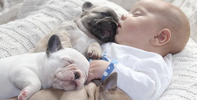 French-bulldogs-puppies-keeping-a-baby-warm