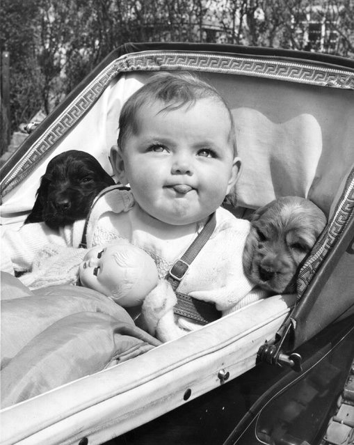 Funny-vintage-photos-of-dogs-(5)