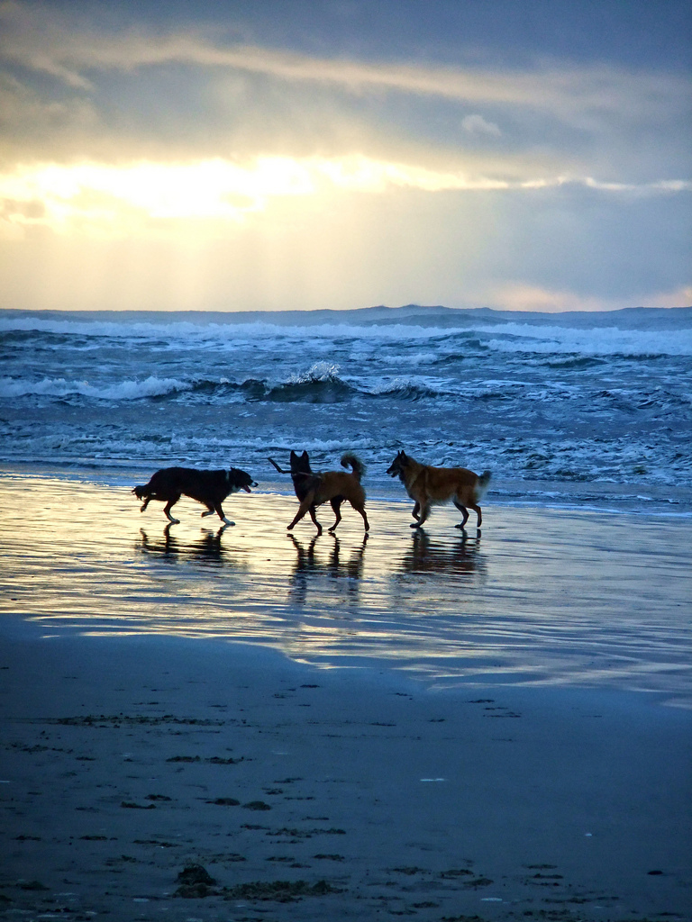 beach-dogs-at-sunset