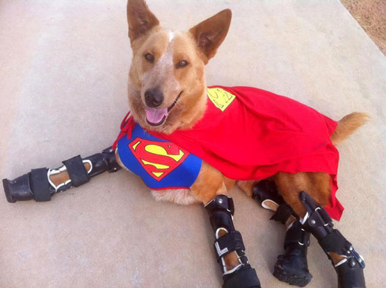 bionic-dog-superman