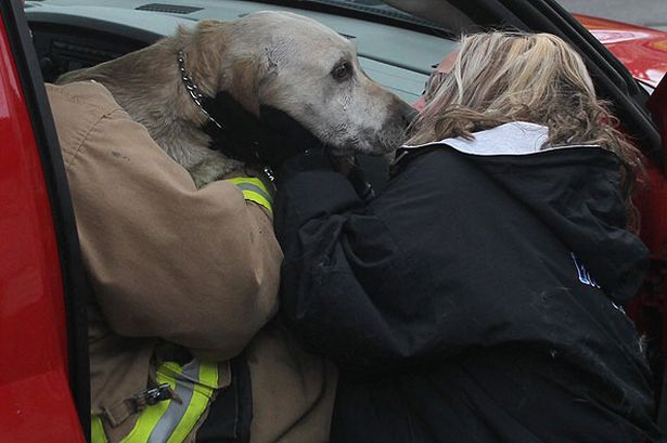 coda-a-yellow-lab-gets-a-kiss-on-the-nose-from-one-of-his-owners-kim-carlson-after-he-was-rescued-from-a-house-fire-and-given-mouth-to-nose-respiratio-981869037