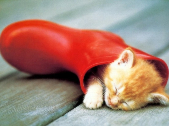 cute-orange-kitten-sleeping-in-rain-boot