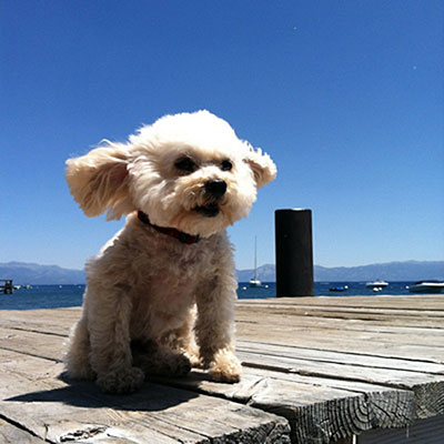 dogs-on-vacation-charley-lake-tahoe-m