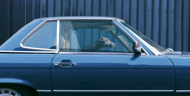 feeldesain-The-Silence-of-Dogs-in-Cars01