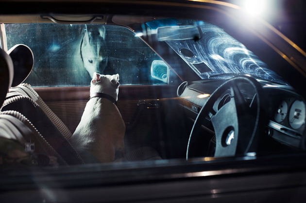 feeldesain-The-Silence-of-Dogs-in-Cars010