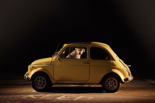 feeldesain-The-Silence-of-Dogs-in-Cars013