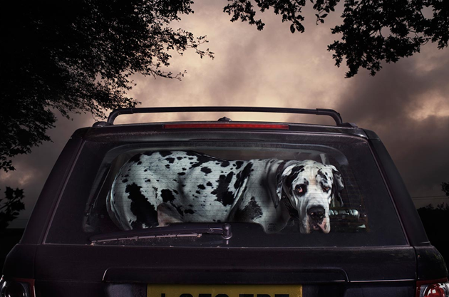 feeldesain-The-Silence-of-Dogs-in-Cars015