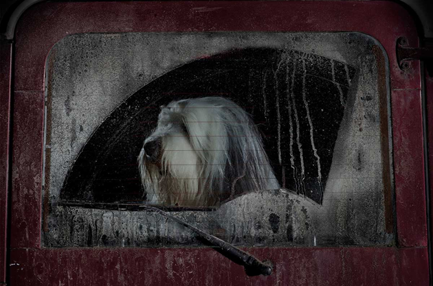 feeldesain-The-Silence-of-Dogs-in-Cars016