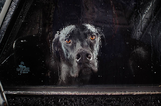 feeldesain-The-Silence-of-Dogs-in-Cars017