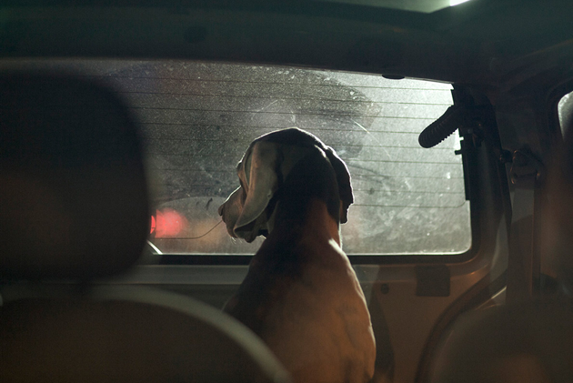 feeldesain-The-Silence-of-Dogs-in-Cars018