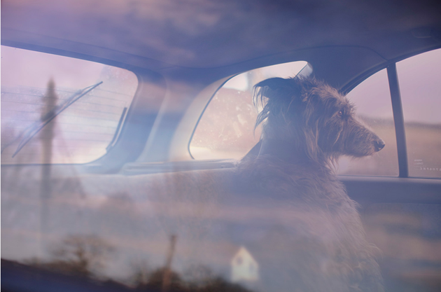 feeldesain-The-Silence-of-Dogs-in-Cars019