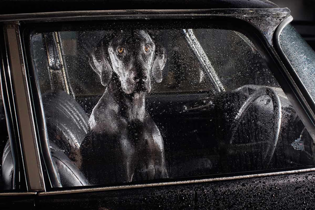 feeldesain-The-Silence-of-Dogs-in-Cars02