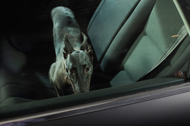 feeldesain-The-Silence-of-Dogs-in-Cars04