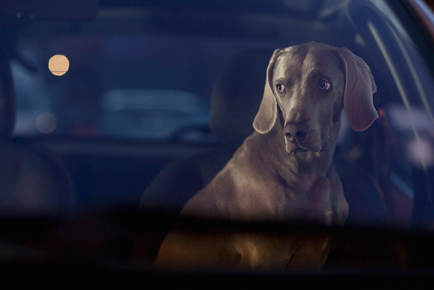 feeldesain-The-Silence-of-Dogs-in-Cars06