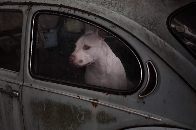 feeldesain-The-Silence-of-Dogs-in-Cars08