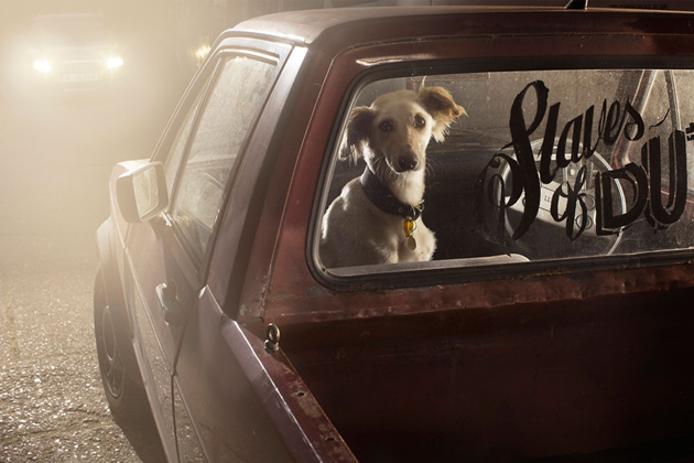 feeldesain-The-Silence-of-Dogs-in-Cars09