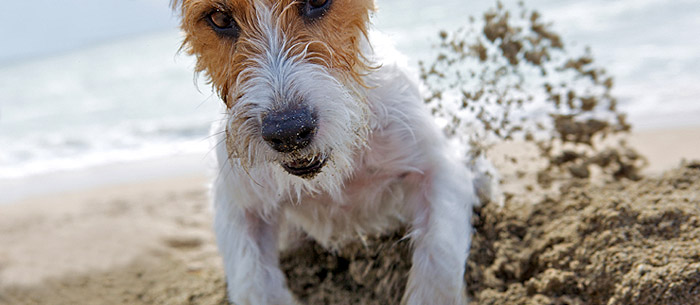 img-article-8-ideas-for-fun-dog-outings