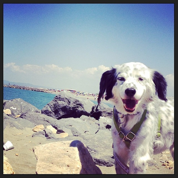 I cani al mare estate 2014 for Cani al mare