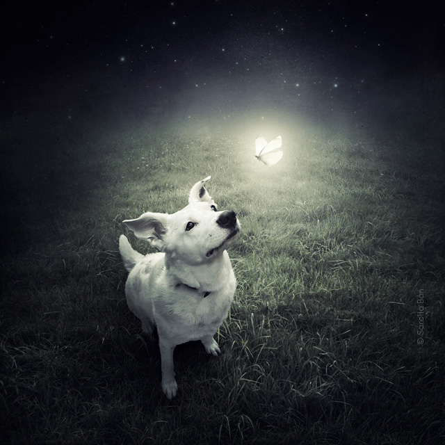surreal_shelter_dog_photos_Sarolta_Ban_01