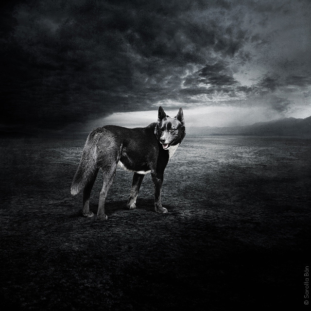 surreal_shelter_dog_photos_Sarolta_Ban_04
