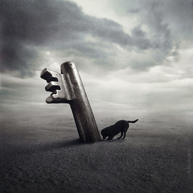 surreal_shelter_dog_photos_Sarolta_Ban_09