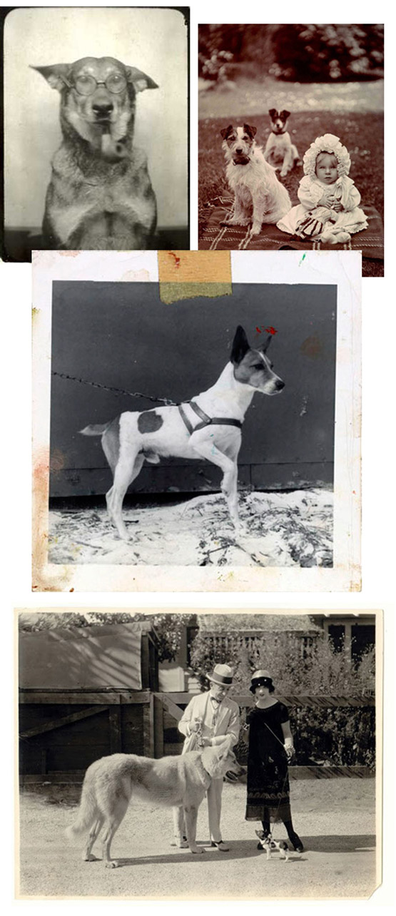 vintage-dog-photos